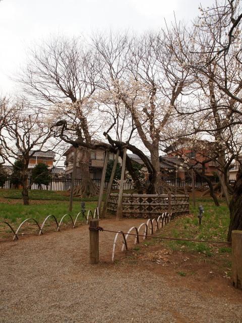 130310_kairakuen_04.jpg
